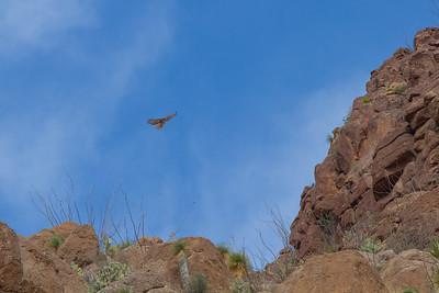 Gliding Hunter