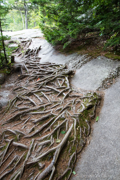 a sculpture of tree roots