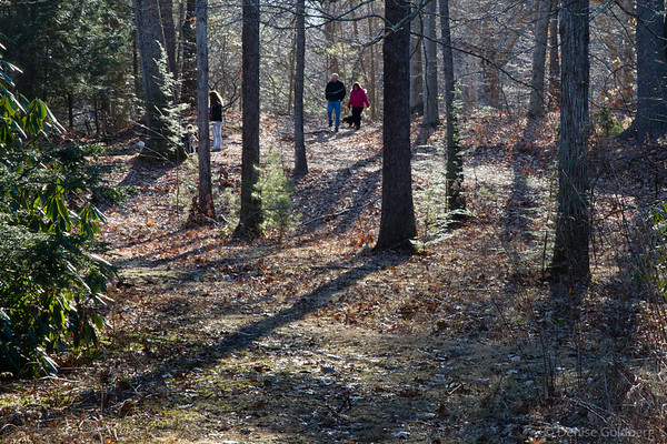 walking in the woods, Maudslay State Park