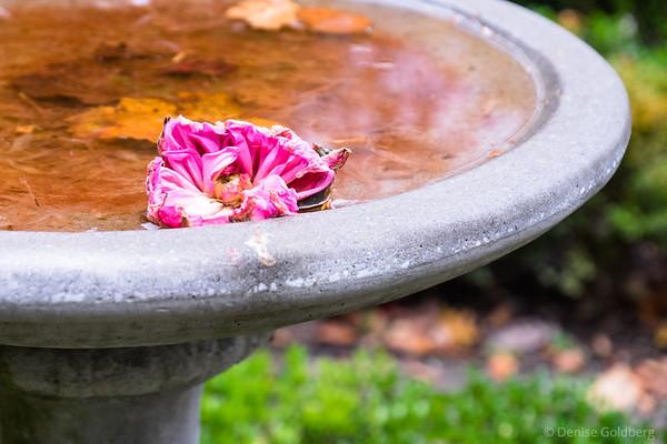 late season flower, floating