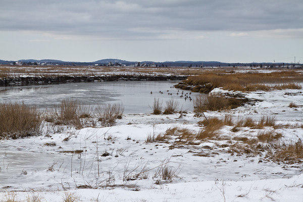 inland, some open water, Parker River National Wildlife Refuge
