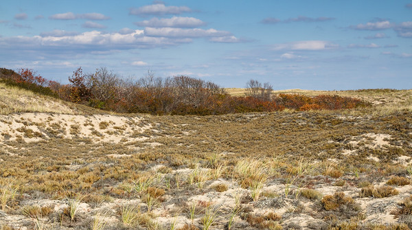 dunes decorated with scrub in autumn colors