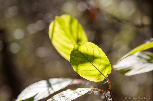 light through leaves