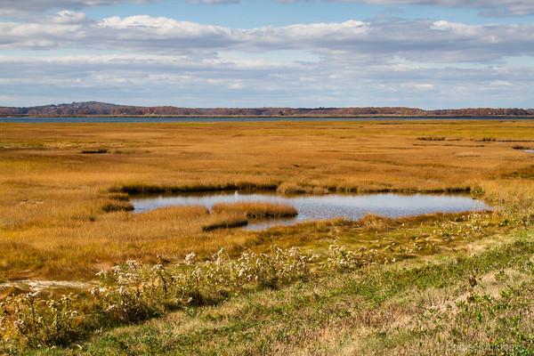 wetlands wearing autumn colors