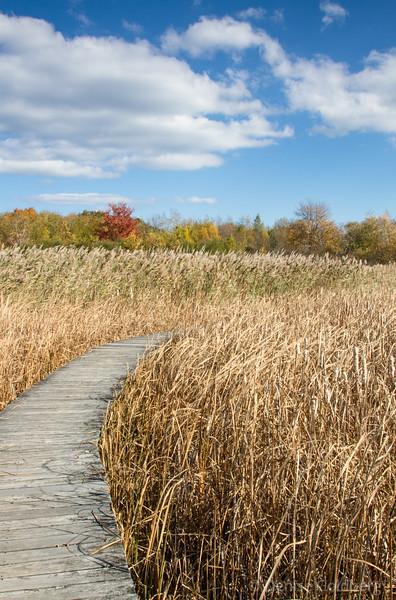 a wetland full of high grasses