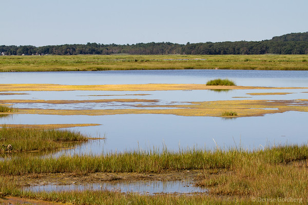 on the inland side of the Parker River National Wildlife Refuge, changing colors