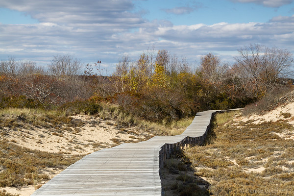 boardwalk cutting through dunes decorated with scrub in autumn colors