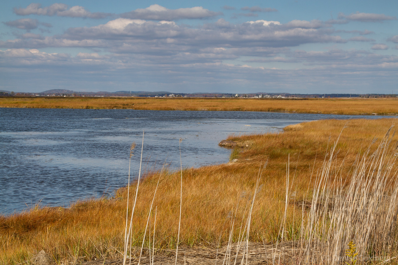 on the inland side of the refuge, grasses wearing an autumn hue