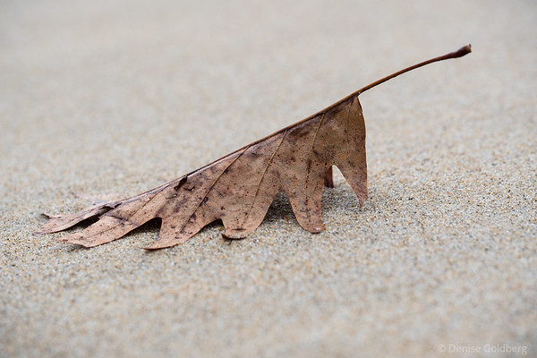 a leaf on the beach