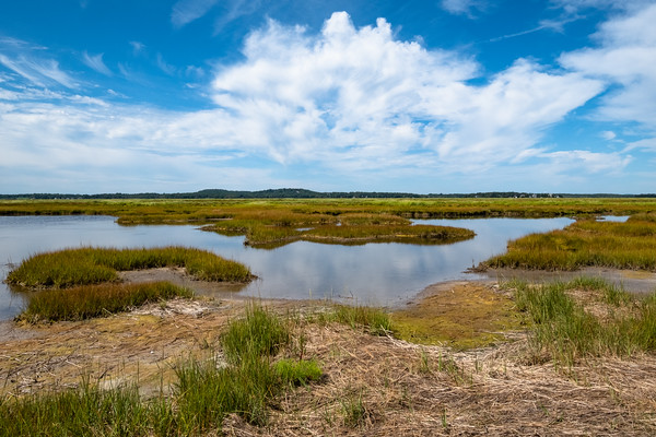 looking inland, Parker River National Wildlife Refuge