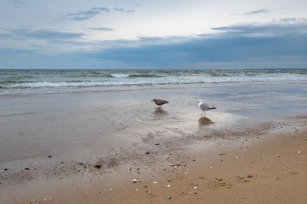 sea gulls at Parker River National Wildlife Refuge