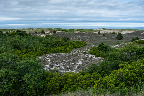 looking to the ocean from Hellcat trail, Parker River National Wildlife Refuge