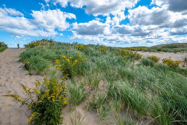 beach grass, Parker River National Wildlife Refuge
