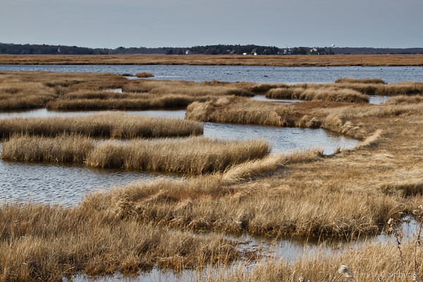 grasses and water, Parker River National Wildlife Refuge
