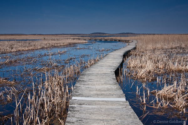 boardwalk through the marsh, Parker River National Wildlife Refuge