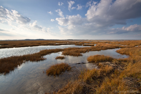 Parker River wetlands, autumn grasses