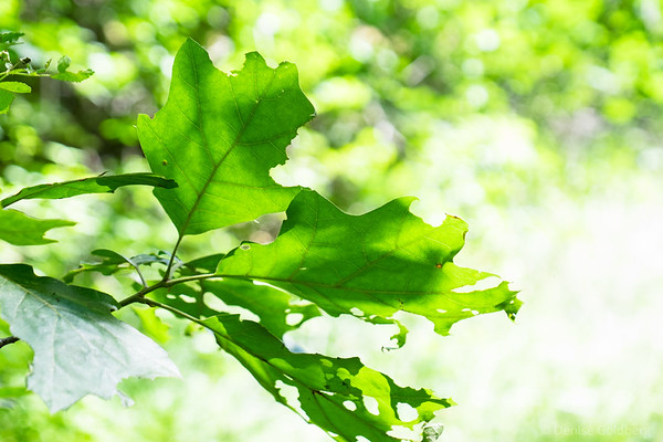 leaves, a splash of green