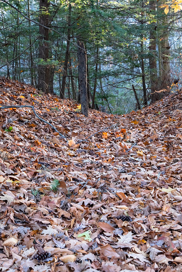 leaves on the ground, Maudslay State Park