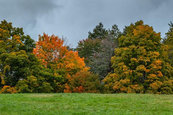 autumn leaves in orange, Maudslay State Park