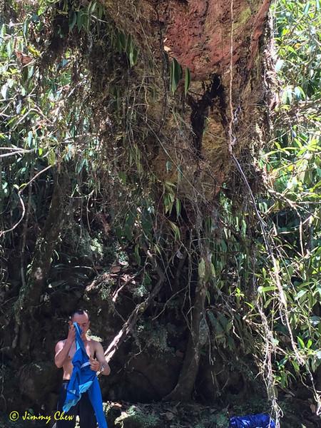 Underneath the big log.