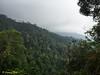 "Smooth forest landscape.<br /> <br /> Album: <a href=""https://www.facebook.com/media/set/?set=a.10154052364198529.1073742057.645243528&type=1&l=bbe4fac2ce"">https://www.facebook.com/media/set/?set=a.10154052364198529.1073742057.645243528&type=1&l=bbe4fac2ce</a>"