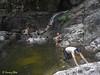 "The swimming/diving pool below Twin Falls.<br /> <br /> Full album: <a href=""https://www.facebook.com/media/set/?set=a.10154114607093529.1073742063.645243528&type=1&l=858582424b"">https://www.facebook.com/media/set/?set=a.10154114607093529.1073742063.645243528&type=1&l=858582424b</a>"