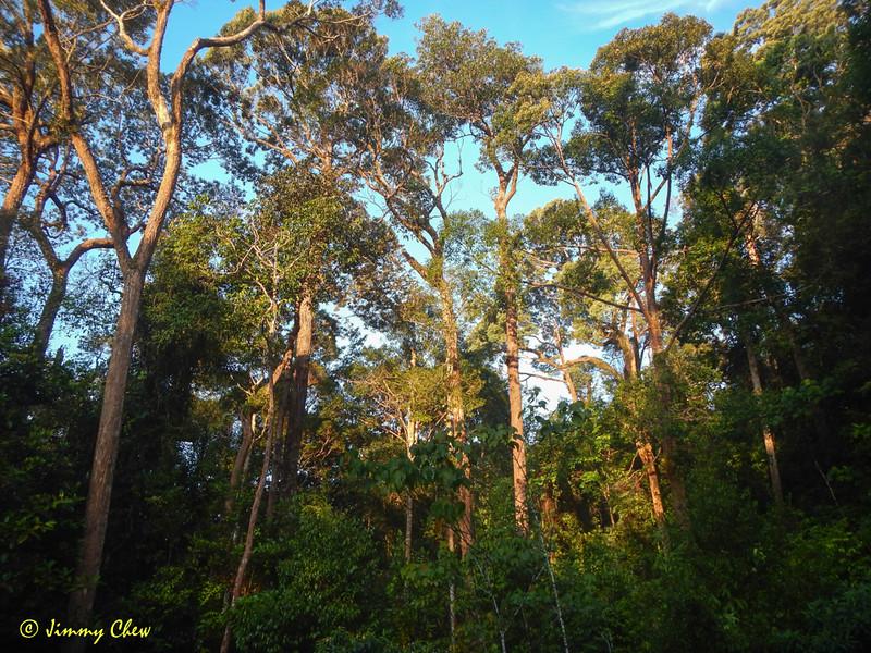 "Healthy forest.<br /> <br /> Full album: <a href=""https://www.facebook.com/media/set/?set=a.10154114607093529.1073742063.645243528&type=1&l=858582424b"">https://www.facebook.com/media/set/?set=a.10154114607093529.1073742063.645243528&type=1&l=858582424b</a>"