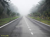 "The misty road.<br /> <br /> Full album: <a href=""https://www.facebook.com/media/set/?set=a.10154114607093529.1073742063.645243528&type=1&l=858582424b"">https://www.facebook.com/media/set/?set=a.10154114607093529.1073742063.645243528&type=1&l=858582424b</a>"