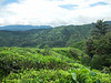 """The view after exiting from the forest back to the tea plantation.<br /> <br /> Album: <a href=""""https://www.facebook.com/media/set/?set=a.10154598392598529.1073742084.645243528&type=3"""">https://www.facebook.com/media/set/?set=a.10154598392598529.1073742084.645243528&type=3</a>"""