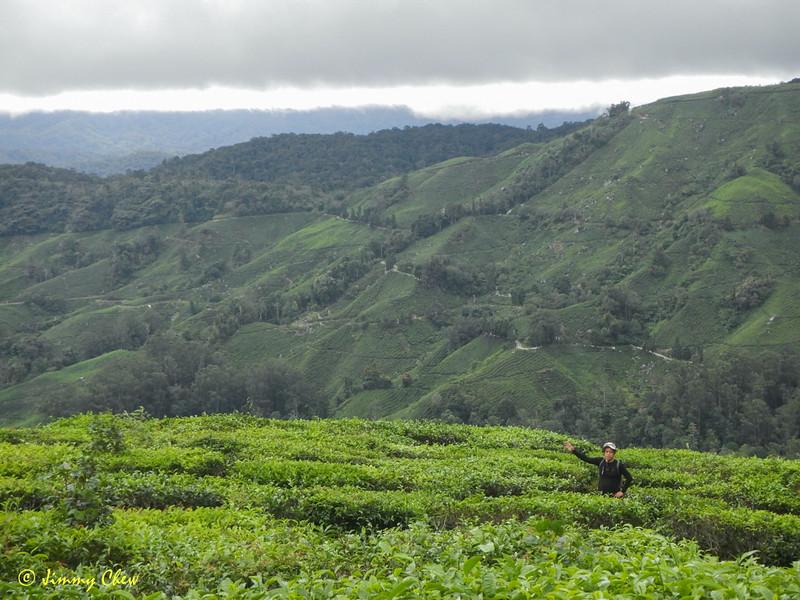 "@cj has the whole tea plantation to himself.<br /> <br /> Album: <a href=""https://www.facebook.com/media/set/?set=a.10154598392598529.1073742084.645243528&type=3"">https://www.facebook.com/media/set/?set=a.10154598392598529.1073742084.645243528&type=3</a>"