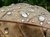 "Water droplets.<br /> <br /> Album: <a href=""https://www.facebook.com/media/set/?set=a.10154598392598529.1073742084.645243528&type=3"">https://www.facebook.com/media/set/?set=a.10154598392598529.1073742084.645243528&type=3</a>"