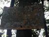 "Berembun is part of Mentigi Forest Reserve.<br /> <br /> Album: <a href=""https://www.facebook.com/media/set/?set=a.10154598392598529.1073742084.645243528&type=3"">https://www.facebook.com/media/set/?set=a.10154598392598529.1073742084.645243528&type=3</a>"