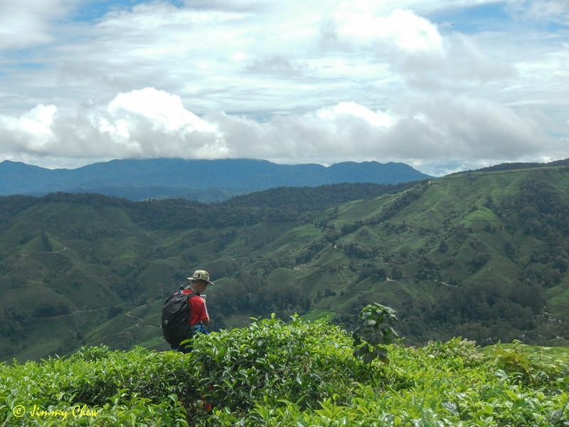 "@eddie and the majestic tea plantation. <br /> <br /> Album: <a href=""https://www.facebook.com/media/set/?set=a.10154598392598529.1073742084.645243528&type=3"">https://www.facebook.com/media/set/?set=a.10154598392598529.1073742084.645243528&type=3</a>"