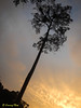 Tree during sunset.