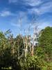 Barren tree.