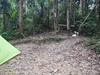 Alan's hammock at a camouflaged spot.