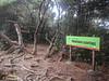Permatang Guntong peak