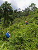 No trail all the way. Chop, chop, chop...<br /> <br /> This is the area where the babi hutan appeared. Description at album.