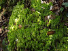 Moss available at ~ 1,200m -- air quality really good here.