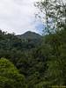 View of Bukit Jangkau peak from farmland. Between 35°-40° in gradient.