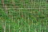 '3D stereogram image' -- find the farmer...!