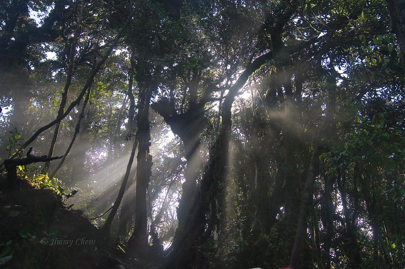 Sun rays near trailhead to Gunung Irau, Brinchang, Cameron Highlands.