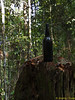 """Bottle left by previous trekkers. On the way down, I saw one more!<br /> <br /> Quite unlike <a href=""""https://www.facebook.com/photo.php?fbid=10151042214623529&l=aca2761fb5"""">https://www.facebook.com/photo.php?fbid=10151042214623529&l=aca2761fb5</a> though..."""