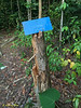 Signpost needs a new tree!