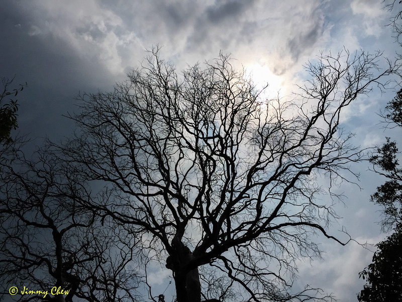 Barren tree.