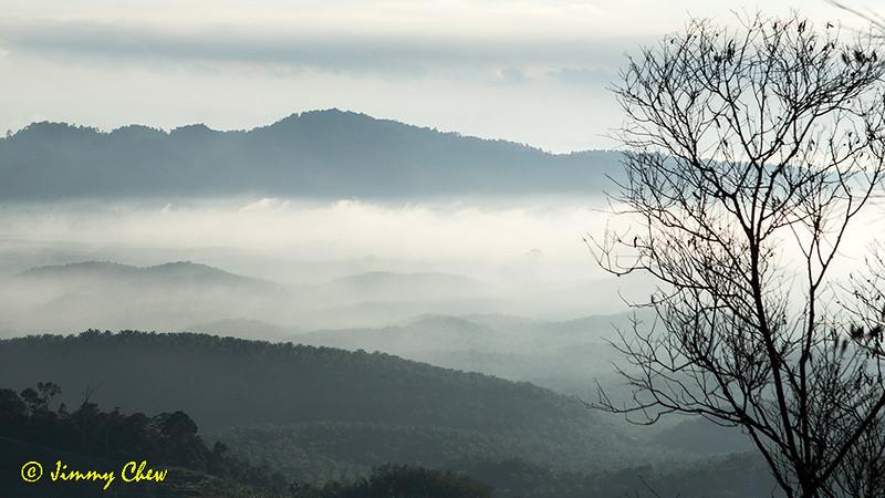 Foggy across.