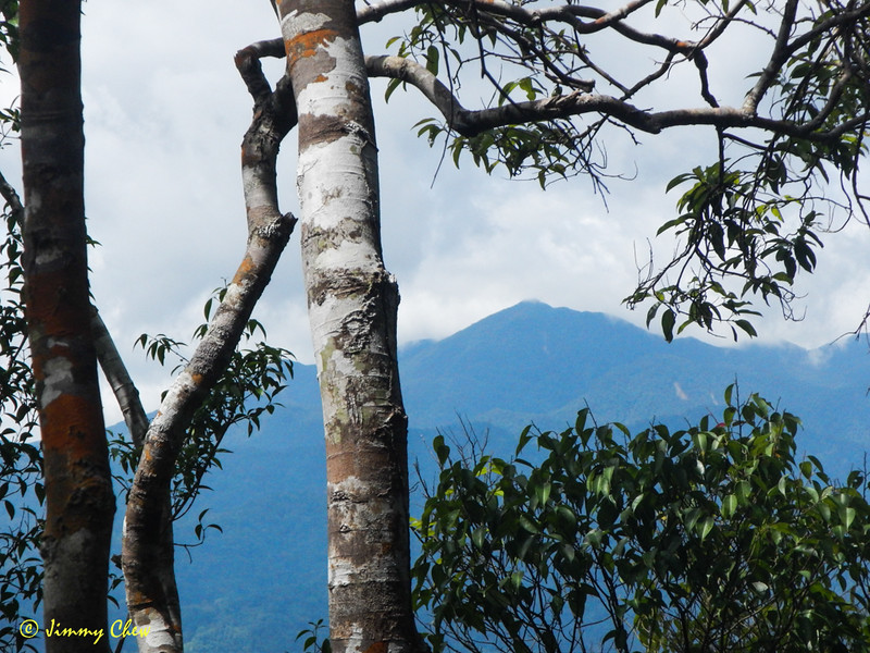 Glimpse of Rajah peak from Bukit Tetek.