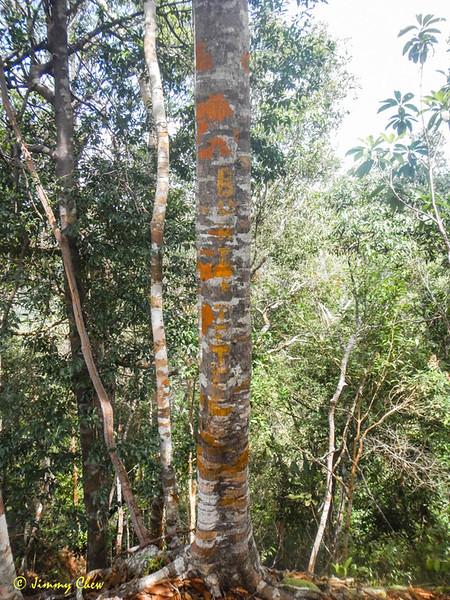 The words Bukit Tetek (Nipple Hill) on tree trunk.