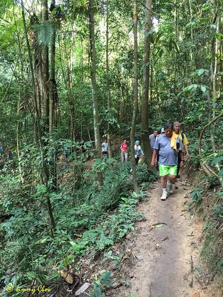 Tan Sri leading the walk on Salleh Trail.
