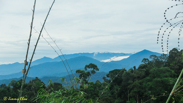 Can see Genting Highlands from this point at the false peak. The pointy peak on the right of GH is Bukit Bunga Buah and the lower peak on the left of GH is Bukit Boyan. Along the GH ridge (towards left), the lofty peak is Bukit Tunggul.